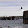 Holyhead native jumping into the Irish Sea
