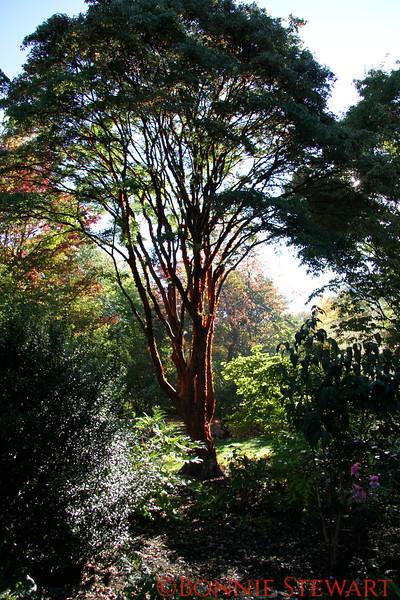 Bodnant  Botanical Garden, Wales