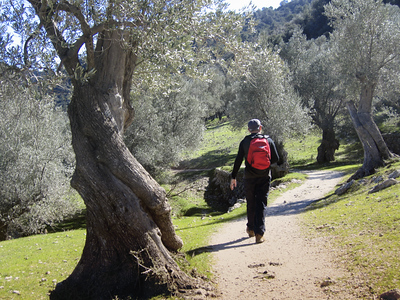 Walking the olive groves
