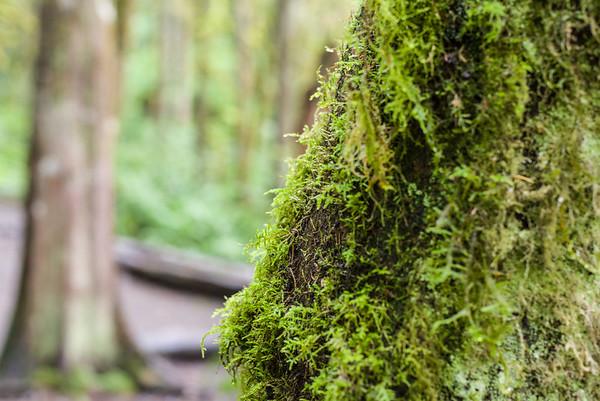 Happy moss, thanks to the rain