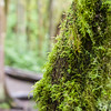 Happy moss, thanks to the rain