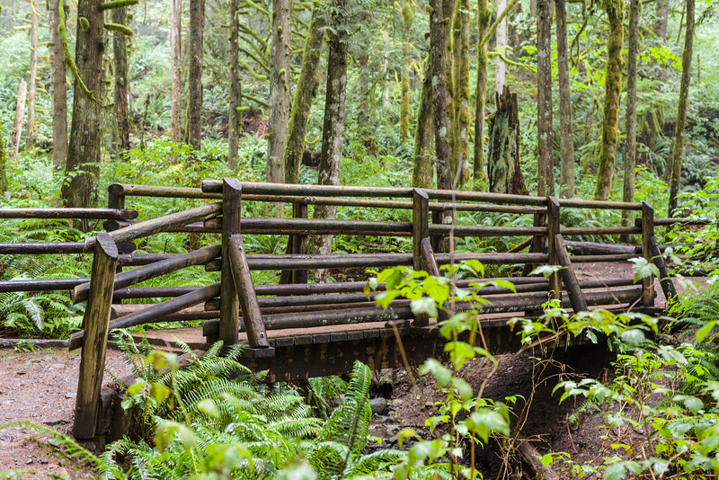 Nice bridge on Wallace Falls trail
