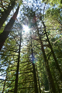 A look up into the treetops.