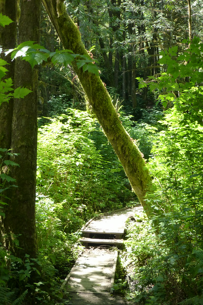 Path along the Woody Trail to Wallace Falls