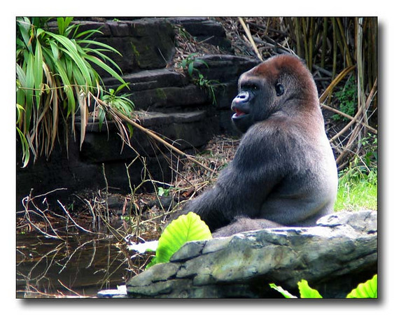 Anybody Got A BananaltbrgtIMG_2135w (33901141)