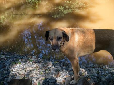 Lula - the traumatized hound