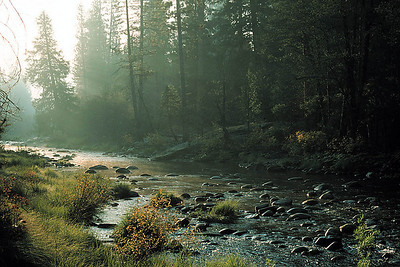 Morning on the Merced River, Yosemite National Park