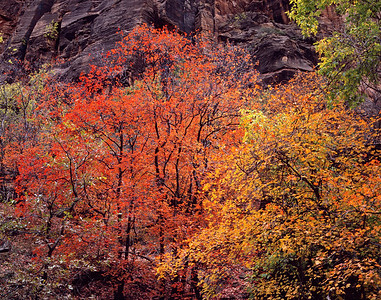 Virgin Narrows Canyon, Zion National Park, UT