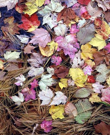 Autumn at Colyer Lake, PA