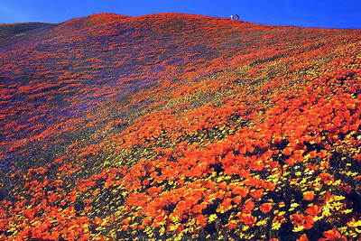 Tehachapi Hills, CA