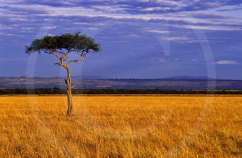 Serengeti Plain, Kenya, East Africa.