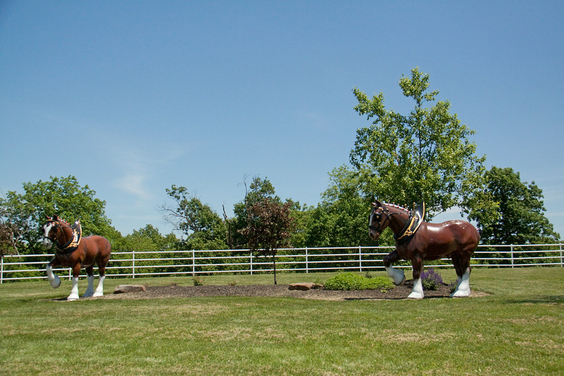 Statues of the giant Clydesdales greet you just after passing through the gate.  You have to reserve tickets for a particular date and time to go on the tour.