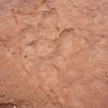 Dinosaur footprint in sandstone rock.