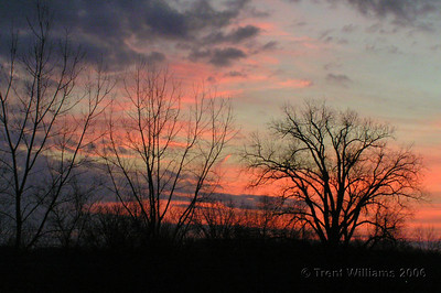 A beautiful pink sunrise over the backyard of my sister's place.  Dark clouds hang overhead.