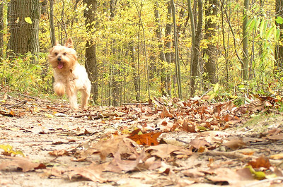Mady running  through lots of leaves
