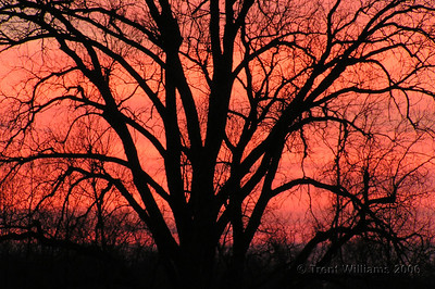 A beautiful pink sunrise over the backyard of my sister's place. I have an obsession with this tree and sunrises.