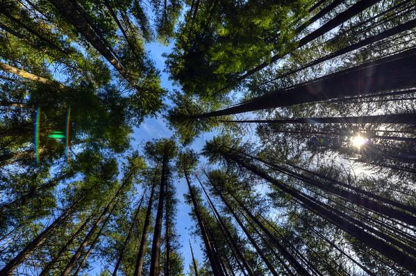 Trees on Rattlesnake Ridge