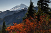 Mount Baker with Autumn Tree