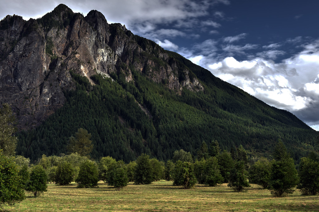 Mount Si Grove