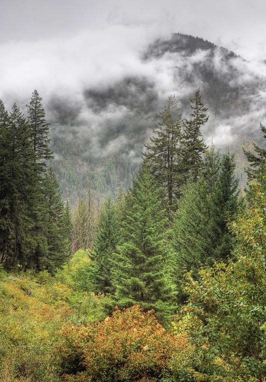 Harts Pass Misty Pines