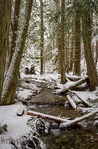 A creek in winter