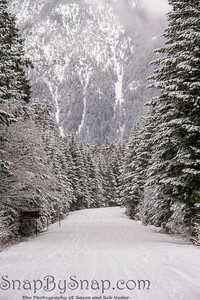A snow covered road through a mountains pine forest