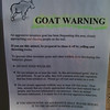 As we ascended Hurricane Ridge, we were warned about aggressive goats...