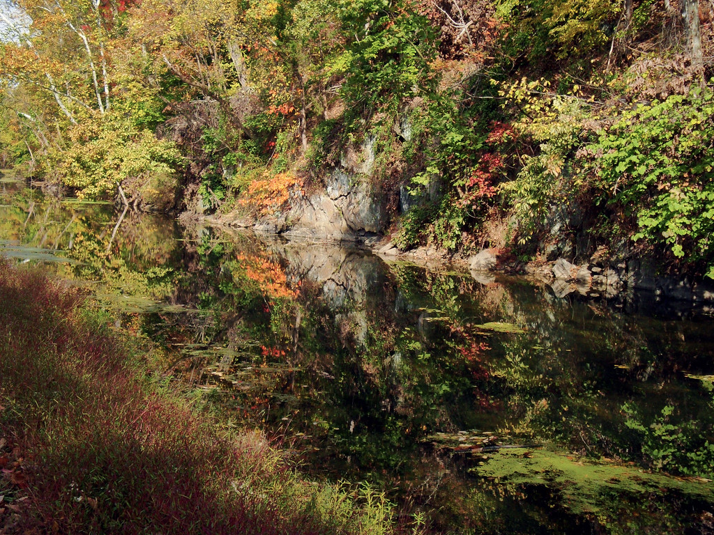 Mirroring Nature