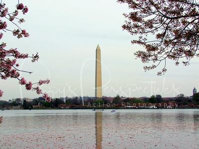 Washington Monument through the cherry blossoms.