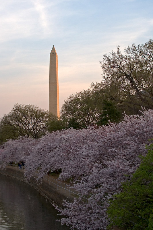 The Washington Monument shortly after dawn shot from the Tidal Basin