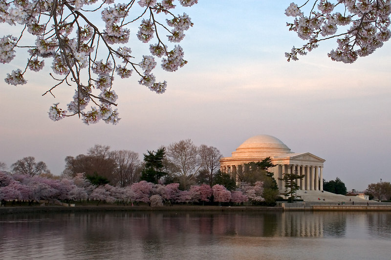 The Jefferson Memorial at dawn framed by cherry blossoms