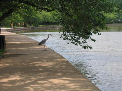 A crane at the tidal basin