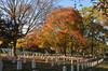 Autumn at Arlington National Cemetery