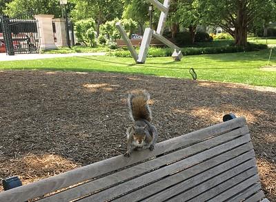 "Squirrel, with ""Cubi XXVI"" by David Smith, 1965"