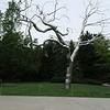 HIrschorn Sculpture Garden