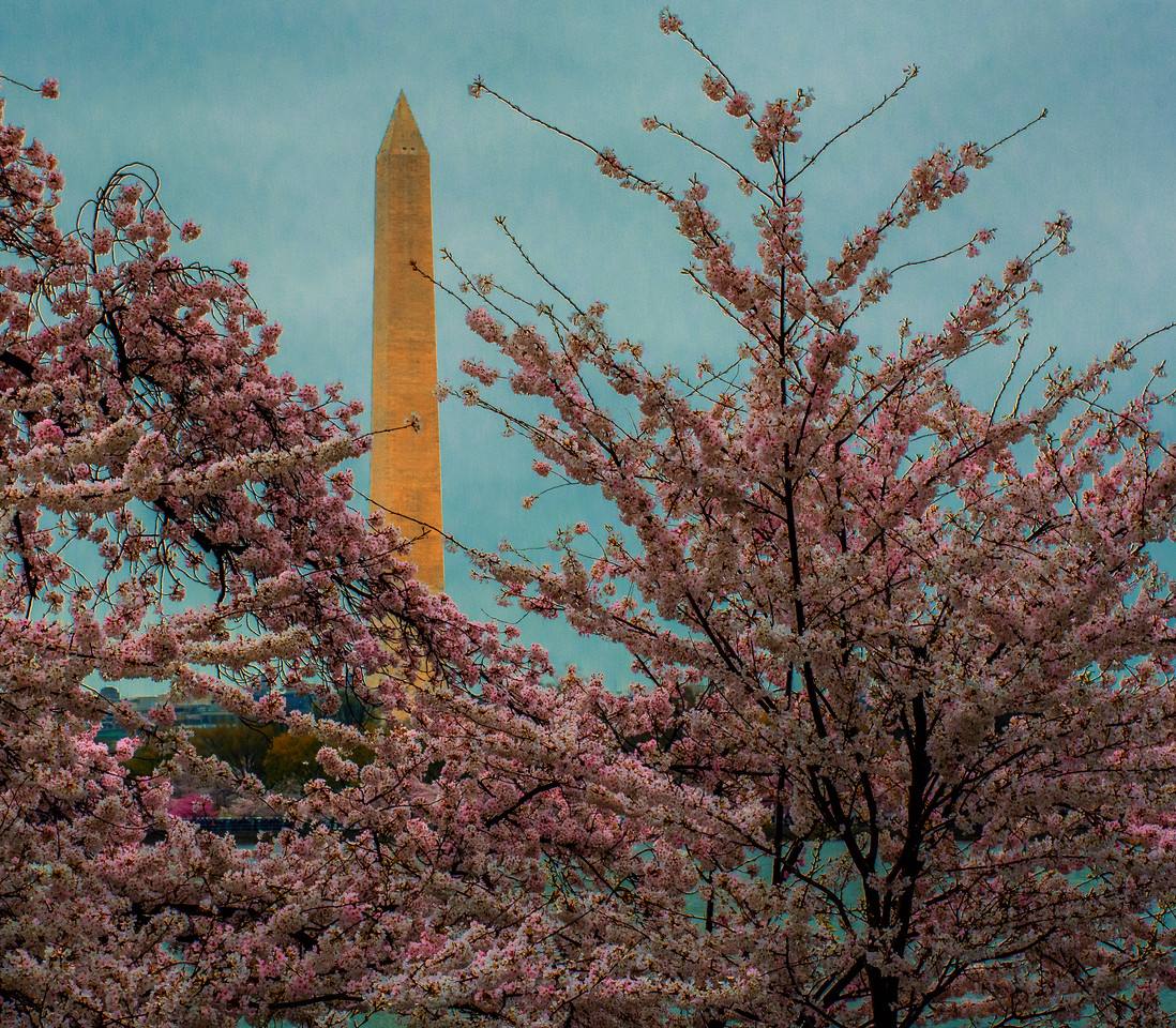 Springtime Washington Monument
