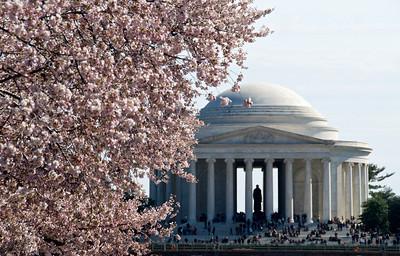 Washington DC Cherry Blossoms (2011)