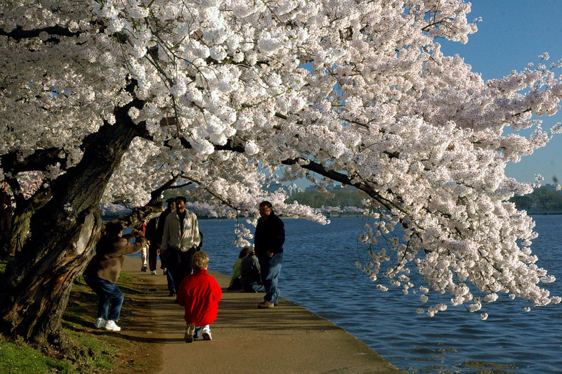 Photos at Cherry Blossom Time.