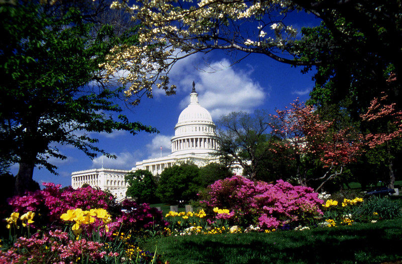 US Capitol In Spring