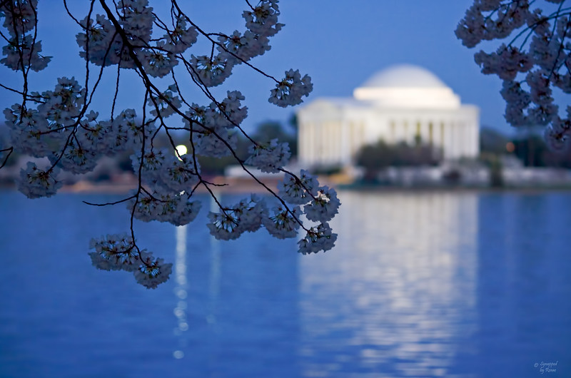 Jefferson at Twilight<br /> <br /> Cherry blossoms on the DC Mall