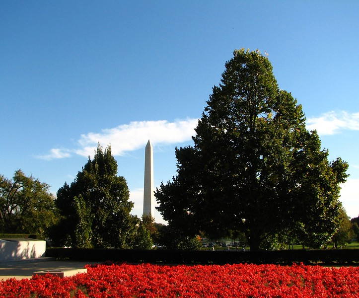 Washington Monument in Bloom