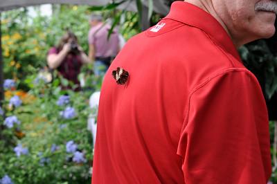 2012Sep09_Brookside Gardens Butterfilies_7409