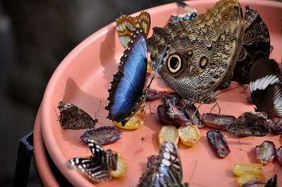 2012Sep09_Brookside Gardens Butterfilies_7417