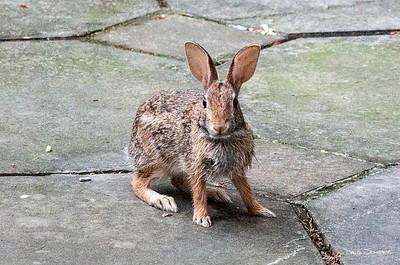 Back yard bunny_sig_1607