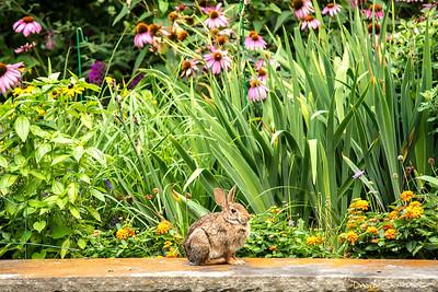 Back yard bunny_sig_1565