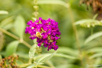 Bakyard garden pollen cover BBee_sig_1659 copy