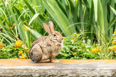 Back yard bunny_sig_1564