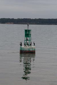 Cormorants on a buoy