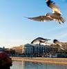 Birds near the Capital building