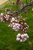 2009-03-27 - Potomac Park - 128 - Cherry Blossoms (Tidal Pool Northwest) - _DSC9163